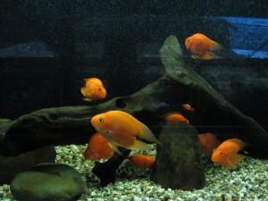Kuching aquarium