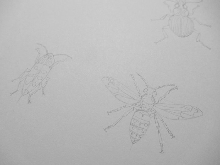 insect sketch