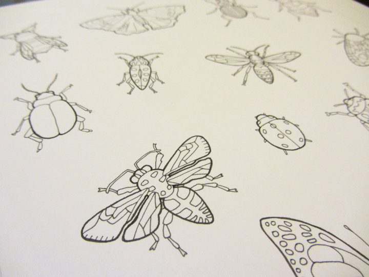 insect adult colouring page