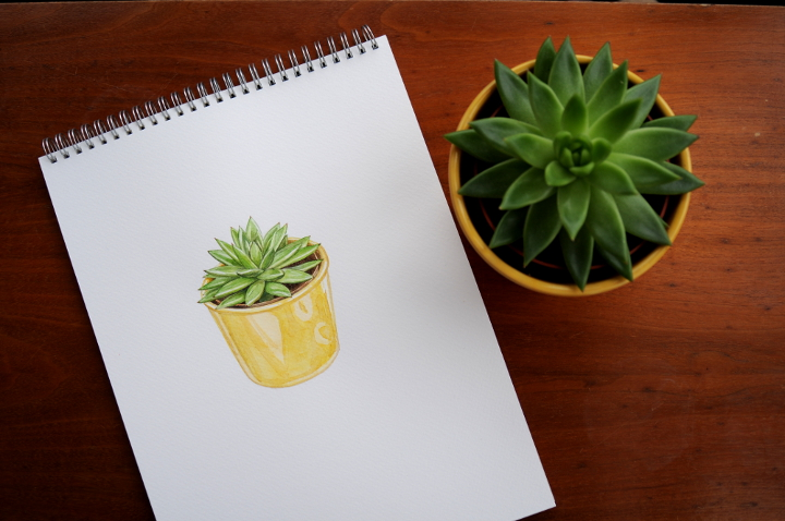 watercolour succulent - botanical illustration