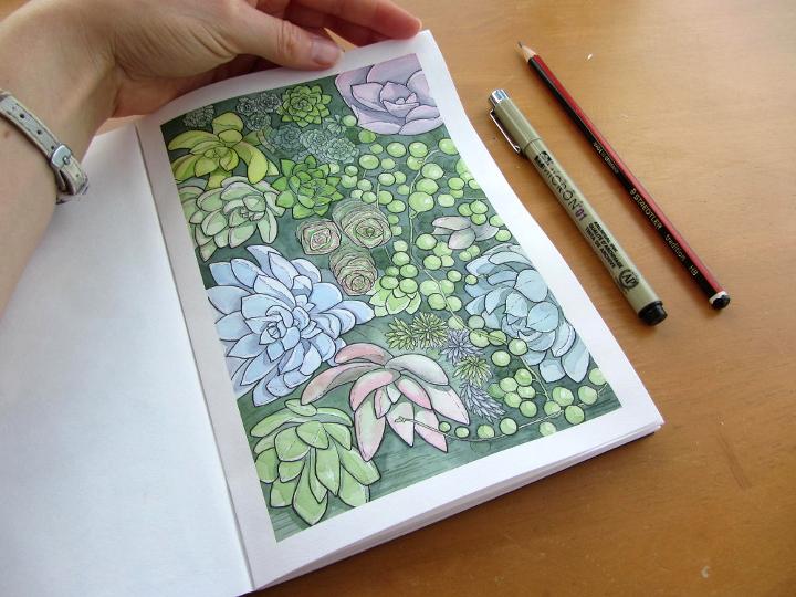 succulents - botanical illustration