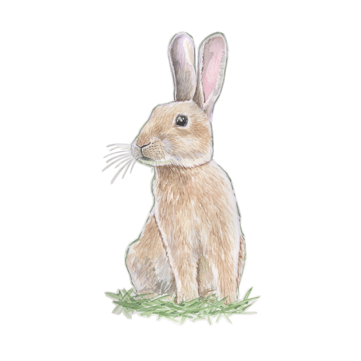 wildlife animal illustration rabbit