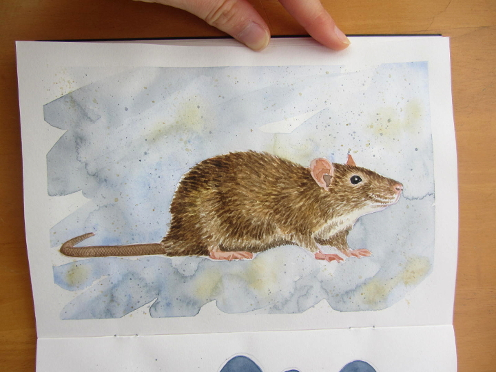 Watercolour rat - wildlife illustration