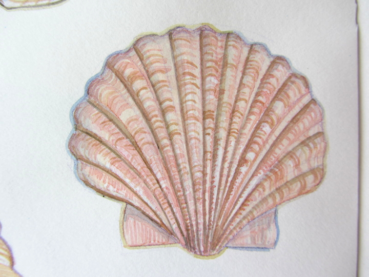 wildlife illustration shell