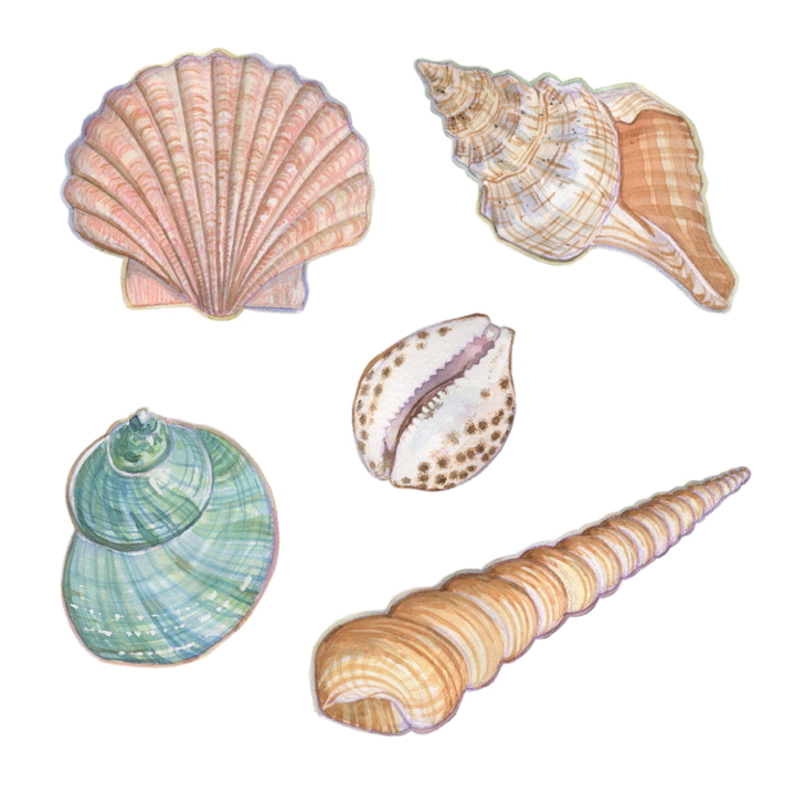 wildlife animal illustration shells