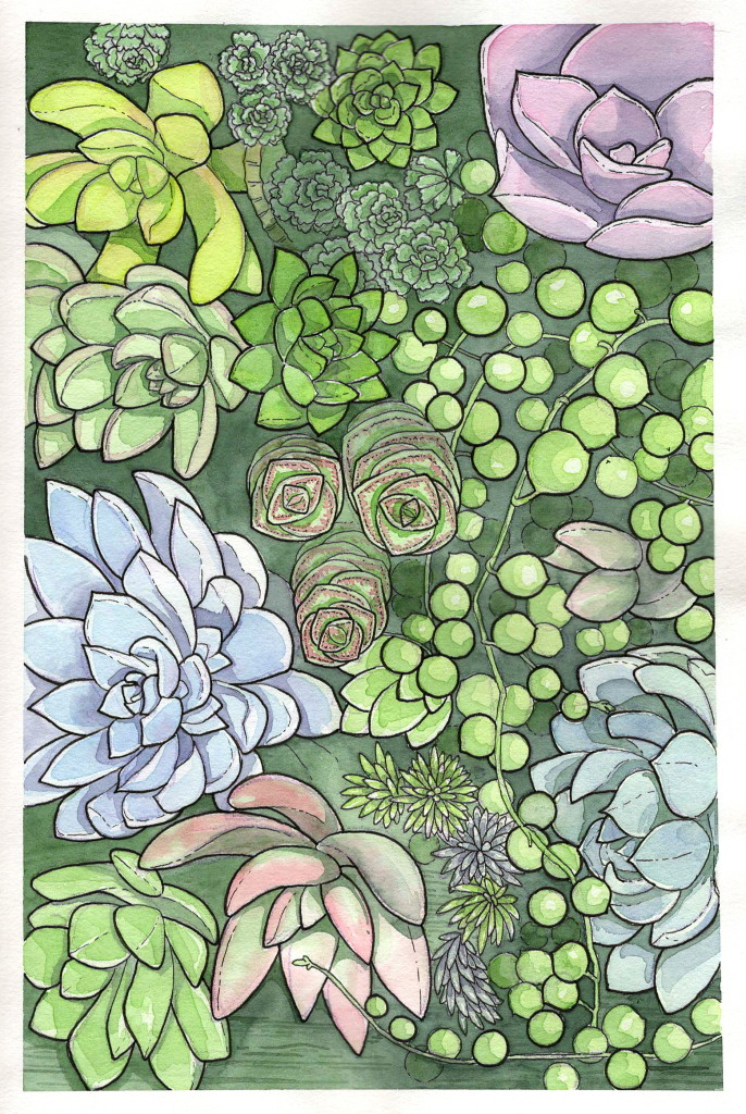 succulents botanical illustration
