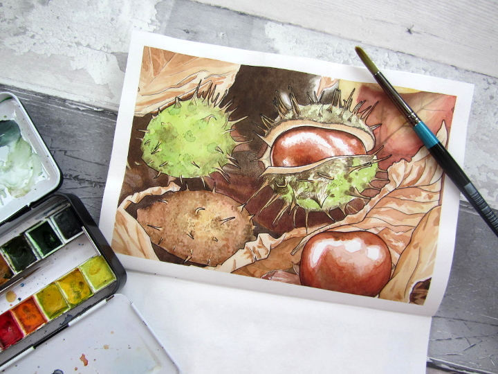 conker watercolour, botanical illustration