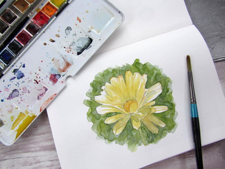 yellow flower botanical illustration