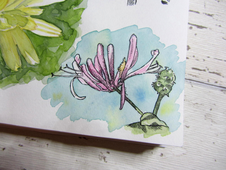 Pen ink and watercolour flower