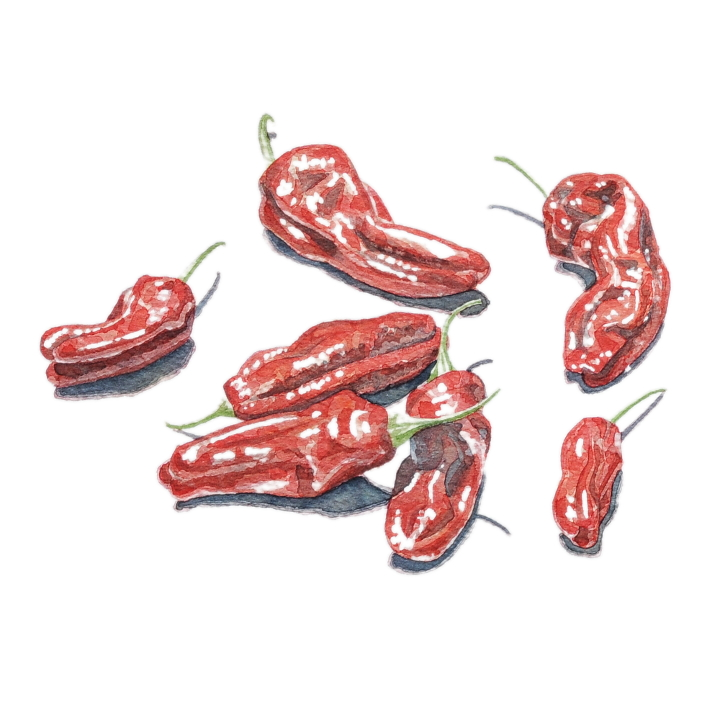 Chillis food illustration by illustrator Clare Willcocks